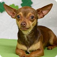 Adopt A Pet :: Nadia - Dublin, CA