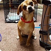 Adopt A Pet :: Tinkerbell - New Oxford, PA