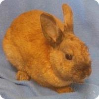 Adopt A Pet :: Rufus - Woburn, MA