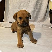 Adopt A Pet :: Stephanie - West Bend, WI