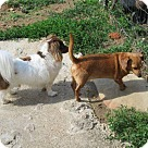 Adopt A Pet :: Oscar with Buster