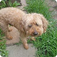 Adopt A Pet :: Mr. Poof - Hillside, IL