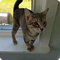 Adopt A Pet :: Tyler - Brainardsville, NY