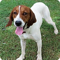 Adopt A Pet :: Rigsby - Glastonbury, CT