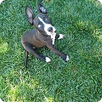 Adopt A Pet :: Jay - Meridian, ID