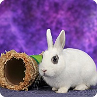 Adopt A Pet :: Pecan - Marietta, GA