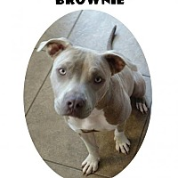Adopt A Pet :: Brownie - Madison, AL