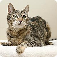 Adopt A Pet :: Suzie Q - Bellingham, WA