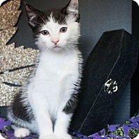 Adopt A Pet :: Nicky - Muskegon, MI