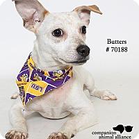 Adopt A Pet :: Butters - Baton Rouge, LA