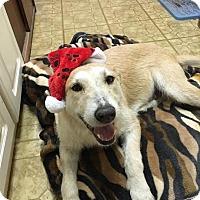 Adopt A Pet :: Zoe - Cincinnati, OH