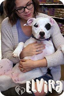 Pit Bull Terrier Mix Dog for adoption in Newport, Kentucky - Elvira