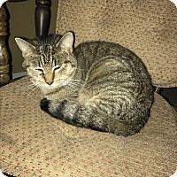 Adopt A Pet :: rudy - millville, NJ