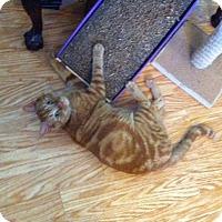 Adopt A Pet :: Puddles - Tampa, FL