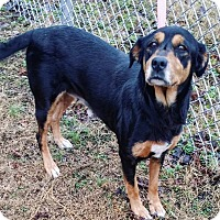 Adopt A Pet :: Brandy Jo - Cannelton, IN