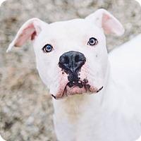 Adopt A Pet :: Lucien - Cleveland, OH