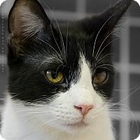 Adopt A Pet :: EDDIE - Houston, TX