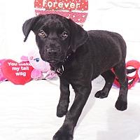 Adopt A Pet :: Walcott - West Chicago, IL