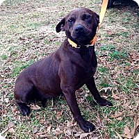 Adopt A Pet :: Daisy - Cookeville, TN
