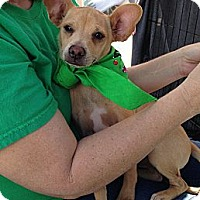 Adopt A Pet :: Marvin - Phoenix, AZ