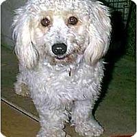 Adopt A Pet :: Sergio - dewey, AZ
