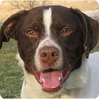 Adopt A Pet :: Laddie - Jacksonville, FL
