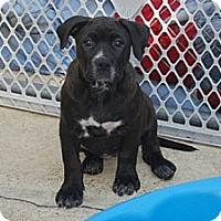 Adopt A Pet :: Pearl - Minneola, FL