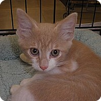 Adopt A Pet :: Malarky - Warren, MI