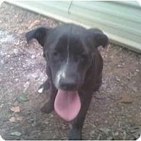 Adopt A Pet :: Ralfy - Wedowee, AL