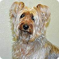 Adopt A Pet :: Alfie - Port Washington, NY