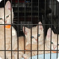 Adopt A Pet :: Daphne, Dixon, and Dyson - Colmar, PA