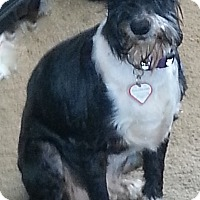 Adopt A Pet :: Ramsey - Laurel, MD