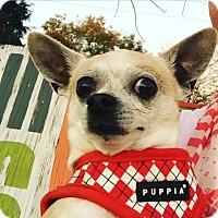 Adopt A Pet :: Legolas - Austin, TX