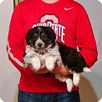 Adopt A Pet :: Rosie - New Philadelphia, OH