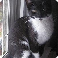 Adopt A Pet :: Mauna Loa - Apex, NC