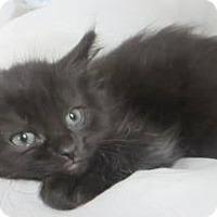 Adopt A Pet :: Dean $20 Dave $20 - Lincolnton, NC