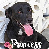 Adopt A Pet :: Princess - Groveland, FL