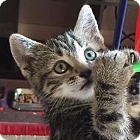 Adopt A Pet :: Winifred - Duluth, GA