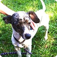 Adopt A Pet :: Dory - Brunswick, ME