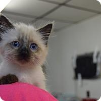 Adopt A Pet :: Hernandez - Hazard, KY