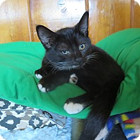 Adopt A Pet :: Cruz - Coos Bay, OR
