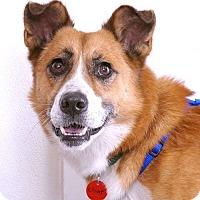 Adopt A Pet :: Champ - Sudbury, MA
