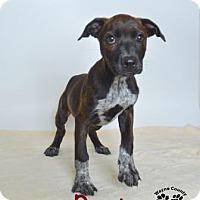 Adopt A Pet :: Rosie - Willingboro, NJ