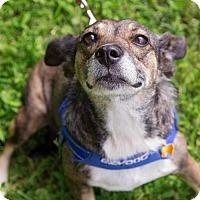 Adopt A Pet :: Ella - Arlington, VA