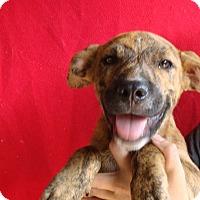 Adopt A Pet :: Toby - Oviedo, FL