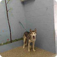 Adopt A Pet :: URGENT on 9/29 SAN BERNARDINO - San Bernardino, CA