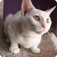 Adopt A Pet :: Vivi - Phoenix, AZ