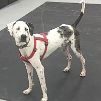 Adopt A Pet :: Seamus - Anchorage, AK
