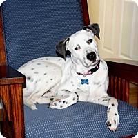 Adopt A Pet :: PUPPY LINCOLN - Norfolk, VA