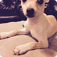 Adopt A Pet :: Mo - Los Banos, CA